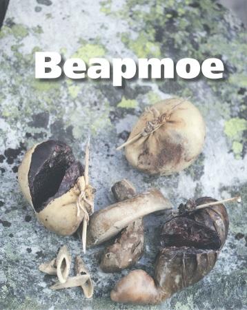 Bilden visar omslaget till boken Beapmoe.